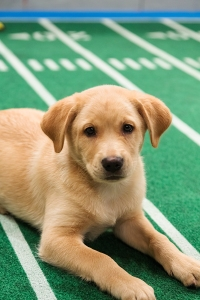 Dogs playing on the field during Puppy Bowl IX, Puppy Bowl 2013. © 2012 Discovery Communications, LLC Credit: Keith Barraclough