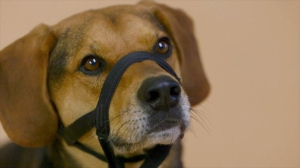 Tennessee gets chosen as a service dog in the first episode of Dogs of War ©A&E TV