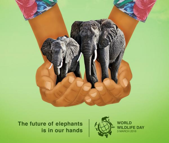 World Wildlife Da