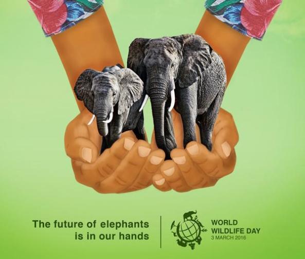 World Wildlife Da